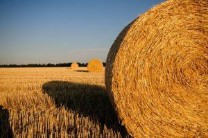 Sprzedaż nieruchomości rolnych